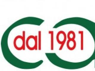 Attività / Licenza Vendita Ferrara  2 - Doro