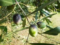 Foto - Terreno agricolo in Vendita a Celle Ligure