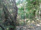 Foto - Terreno agricolo in Vendita a Pietramelara