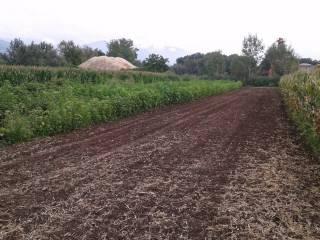 Foto - Terreno agricolo in Vendita a Presenzano