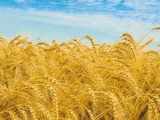 Foto - Terreno agricolo in Vendita a Nuoro