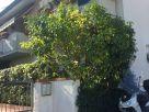 Foto - Appartamento via Treviso 85, Massa