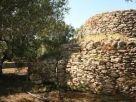 Foto - Terreno agricolo in Vendita a Racale