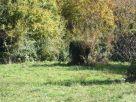 Foto - Terreno agricolo in Vendita a Monte Rinaldo