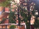 Appartamento Affitto Verona  4 - Borgo Milano - Chievo - Saval