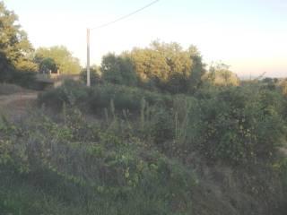 Foto - Terreno agricolo in Vendita a Montepulciano