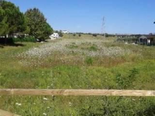 Foto - Terreno agricolo in Vendita a Porto Sant'Elpidio