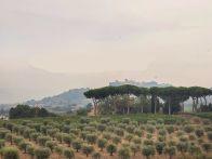 Foto - Rustico / Casale, ottimo stato, 615 mq, Monte Porzio Catone