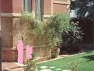 Foto - Villa via Baracca Francesco, Palermo