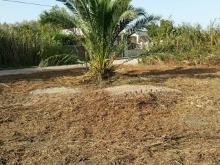 Foto - Terreno agricolo in Vendita a Porto Cesareo