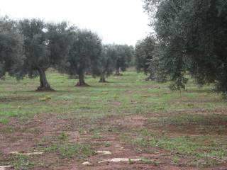 Foto - Terreno agricolo in Vendita a Acquarica Del Capo