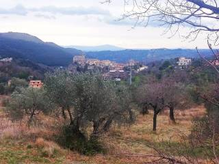Foto - Terreno agricolo in Vendita a Toffia