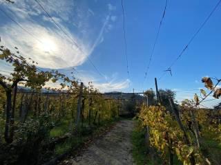 Photo - Country house via di Colonna, San Cesareo