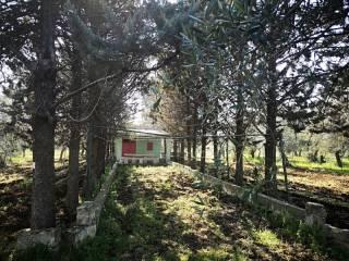 Foto - Rustico Contrada Monte Povero, Bitetto
