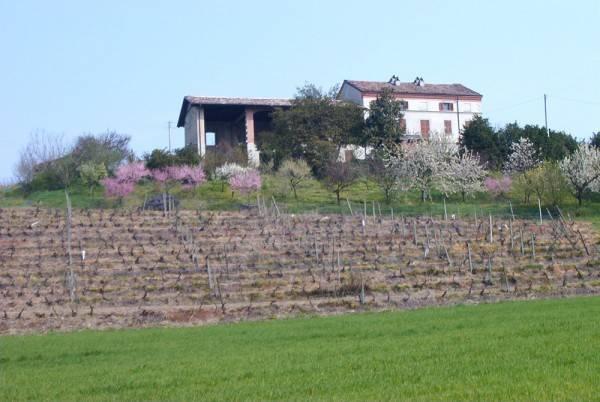 Foto 1 di Rustico / Casale Ozzano Monferrato