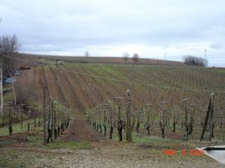 Foto - Terreno agricolo in Vendita a Carpaneto Piacentino