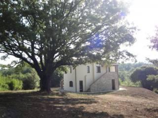 Foto - Rustico / Casale Nei boschi, Niccioleta, Massa Marittima