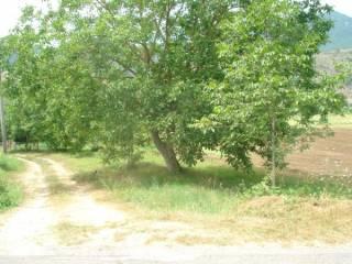 Foto - Terreno agricolo in Vendita a Cassino