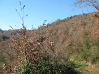 Foto - Terreno agricolo in Vendita a Conca della Campania