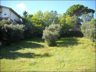 Foto - Terreno agricolo in Vendita a Sant'Omero