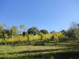 Foto - Terreno agricolo in Vendita a Monteleone d'Orvieto