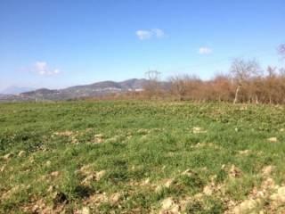 Foto - Terreno agricolo in Vendita a Montemiletto