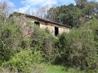 Foto - Terreno agricolo in Vendita a Santa Domenica Talao