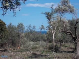Foto - Terreno agricolo in Vendita a Muravera
