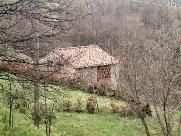 foto vista Rustico / Casale, da ristrutturare, 1060 mq, Molazzana