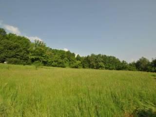 Foto - Terreno agricolo in Vendita a Brogliano