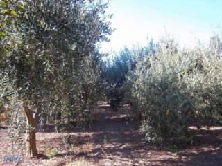 Foto - Terreno agricolo in Vendita a Villaputzu