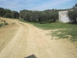 Foto - Terreno agricolo in Vendita a Pianella