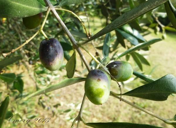 foto  Terreno agricolo in Vendita a Celle Ligure