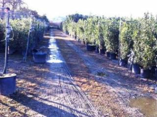 Foto - Terreno agricolo in Vendita a Ripatransone
