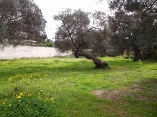 Foto - Terreno edificabile residenziale a Vernole