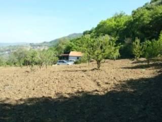 Foto - Terreno agricolo in Vendita a Mezzojuso