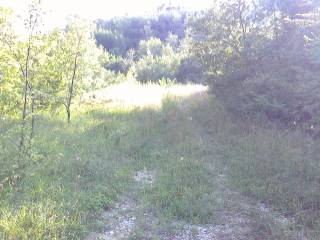 Foto - Terreno agricolo in Vendita a Tossicia