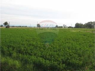 Foto - Terreno agricolo in Vendita a Noceto