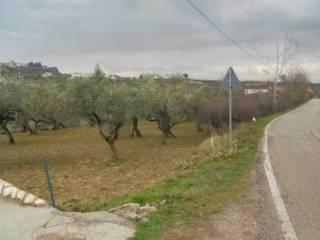 Foto - Terreno edificabile residenziale a Moscufo