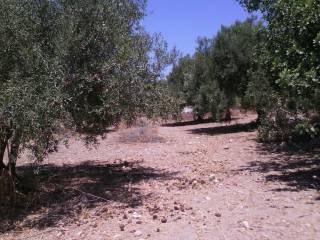Foto - Terreno agricolo in Vendita a Scicli