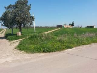 Foto - Terreno agricolo in Vendita a Lucera