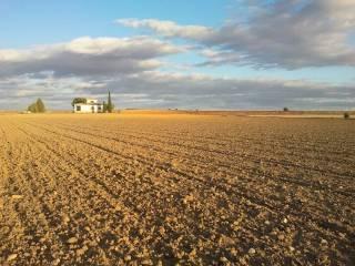 Foto - Terreno agricolo in Vendita a Vercelli
