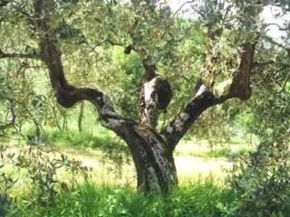 Foto - Terreno agricolo in Vendita a Colonna