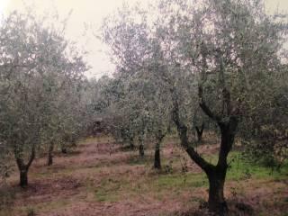 Foto - Terreno agricolo in Vendita a Sesto Fiorentino
