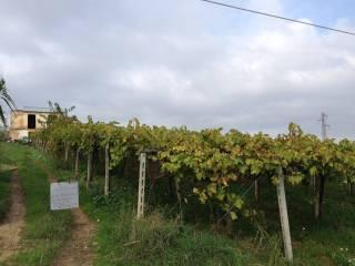 Foto - Terreno agricolo in Vendita a Giuliano Teatino