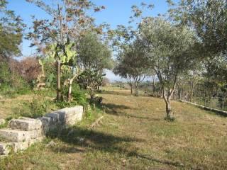 Foto - Terreno agricolo in Vendita a Militello in Val di Catania