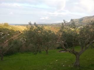 Foto - Terreno agricolo in Vendita a Castellammare del Golfo