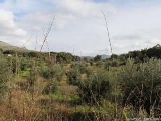 Foto - Terreno edificabile residenziale a Santa Domenica Talao
