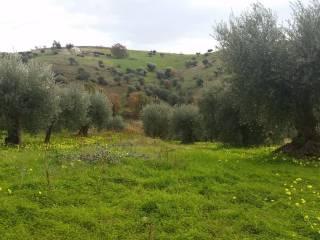 Foto - Terreno edificabile residenziale a Cassano all'Ionio