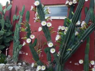 Foto - Villa, buono stato, 118 mq, Santi Cosma E Damiano
